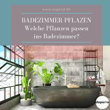 welche pflanzen passen ins badezimmer