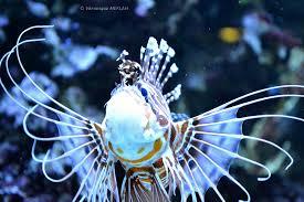 palais de la porte dorée et l aquarium tropical rascasse volante