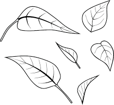 Leaf Coloring Page Lettuce Palm Autumn
