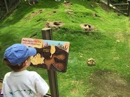 Bronx Zoo Halloween 2017 by Bronx Zoo Children U0027s Zoo Reopens Video The Mama Maven Blog