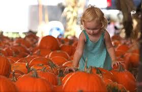 Sarasota Pumpkin Festival by Hunsader Farms Pumpkin Festival Featuring Bello Nock News