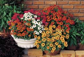 Best Plant For Bathroom Australia by 5 Beautiful Plants For Hanging Baskets