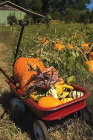 Pumpkin Picking In Ct by Where To Pick Your Own Pumpkins In Ny Nj And Ct