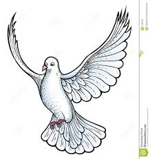 Drawn turtle dove flying pigeon 3