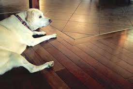 the house counselor answers how do you protect hardwood floors