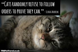 cat quotes amazing quotes about cats 73 about remodel quotes with quotes