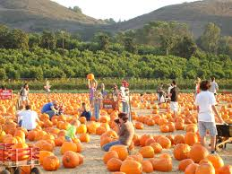 Things To Do On Halloween In Nyc by Best Pumpkin Patches In Southern California Cbs Los Angeles