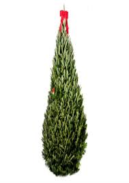 Menards Christmas Tree Stands by Menards Real Christmas Trees Part 33 Menards Tree Guy
