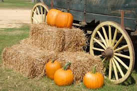 Boone Hall Pumpkin Patch And Corn Maze by Blog