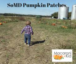 Pumpkin Farms In Southern Maryland by Southern Maryland Pumpkin Patches Macaroni Kid