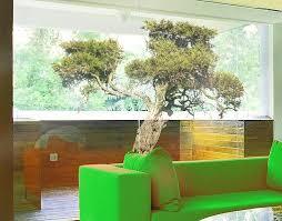 fensterfolie fenstersticker no 394 olivenbaum fensterbilder