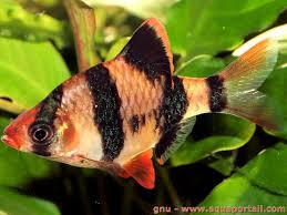 ph aquarium eau douce les 934 meilleures images du tableau aquariophilie d eau douce sur