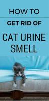 Fresh Drop Bathroom Odor Preventor Ingredients by Best 25 Cleaning Pet Urine Ideas On Pinterest Pet Urine