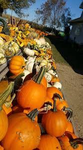 Pumpkin Patch Sioux Falls Sd by Hanselman U0027s Pumpkin Patch Home Facebook
