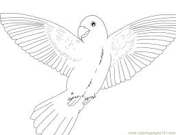 Bird Parrot Coloring Pages