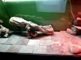 slate tiles for bearded dragons
