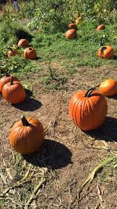 Indianapolis Apple Orchard Pumpkin Patch by 58 Best Butler Orchard Farm Images On Pinterest Orchards