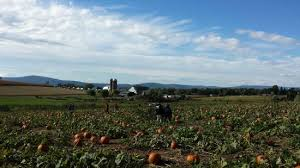 Best Pumpkin Farms In Maryland by Jumbo U0027s Pumpkin Patch Middletown Md Top Tips Before You Go
