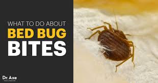 Bed Bug Bites Symptoms Facts & Natural Treatments Dr Axe