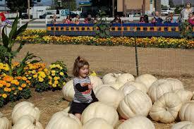 Uesugi Farms Pumpkin Patch by Fall U2013 The Golden Sunshine Life