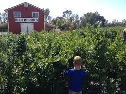 Pumpkin Patch Animal Farm In Moorpark California by Educational Farm Field Trips Age Kids In Socal Trekaroo