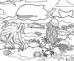 Wonderful Ocean Animals Coloring Pages Nice Design
