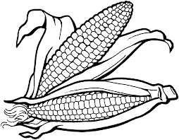Thanksgiving Coloring Pages Corn