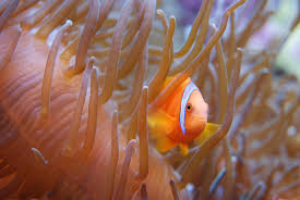 aquarium tropical du palais de la porte dorée aquarium tropical