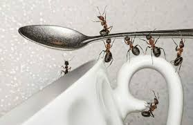 26 Superb Home Reme s to Get Rid of Ants