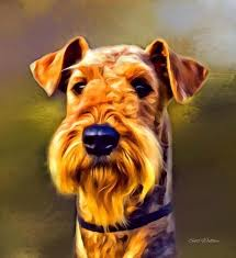 Airedale Terrier Non Shedding by 31 Best Dogs Airedale Terrier Images On Pinterest Airedale