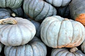Types Of Pumpkins For Baking by The Ultimate Guide To Pumpkin Types And Varieties