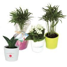 plante d駱olluante bureau mini plante dépolluante pot céramique plante personnalisée