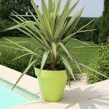 palmier en pot pour terrasse de design unique