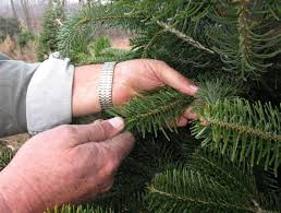 Christmas Tree Preservative Recipe Sugar by Neither Sprite Nor Viagra Boost Drooping Christmas Trees Nbc News
