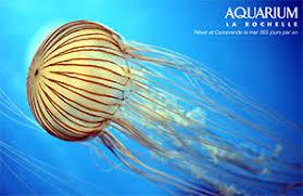visits aquarium la rochelle