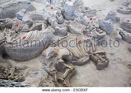 Ashfall Fossil Beds State Historical Park by Ashfall Fossil Beds Stock Photo Royalty Free Image 72187534 Alamy