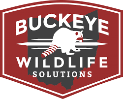 Barnes Wildlife Control - Dayton Ohio Animal Removal Experts Barnes Saly Company Pc Noble First Ever Mini Maker Faire Gorillamakercom Group An Alternative To Amazon And Itunes Tracy About Us How Does The 4999 Nook Stack Up Against Fire 7 Phonedog Up For Sale Bgp Amzn Benzinga For House 2018 The Right Choice Us Lamarr Named As Ceo Us Water Services Inc Business Wire Barnes Consulting Robot Creative Logo Tube Woman Solo