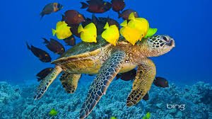 Bing Turtle Fish Underwater Sea Tropical Fish