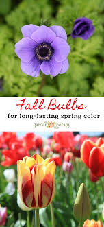 five fall bulbs to plant for lasting colour