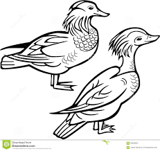 Pin Mandarin Duck Clipart Black And White 9
