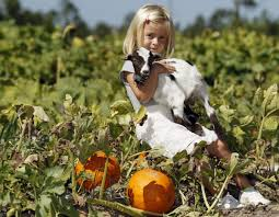 Best Atlanta Area Pumpkin Patch by Pumpkin Patch Brings Fall Family Fun To Auburn Auburn Oanow Com