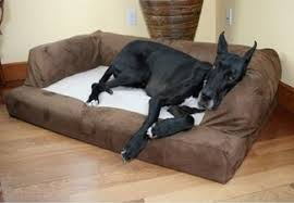 From Bolster Couch Dog Beds to Orthopedic Pet Memory Foam Dog Beds