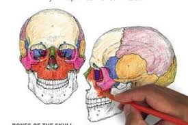 The Anatomy Coloring Book 4th Edition And Physiology