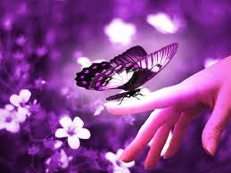 Purple butterfly on finger HD wallpapers