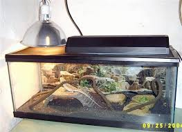 Bearded Dragon Heat Lamp Timer by Keeping Bearded Dragons As Pets