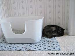 best cat litter boxes the best litter box for your cat my recommendations the