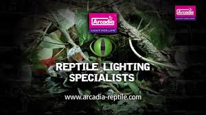 Uvb Lamp Vitamin D3 by Arcadia Reptile D3 Uv Flood Uvb Projection Fitting In 24 And 55w