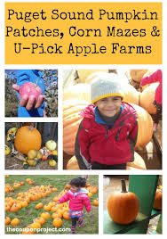 Best Pumpkin Patch Snohomish County by Puget Sound Farms With Pumpkin Patches Corn Mazes And U Pick Apples