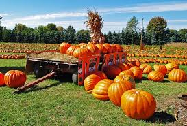 Pumpkin Patch South Bend by Things To Do In Houston This Weekend Sep 29th Oct 1st 2017