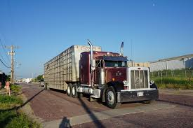 Cattle Market, Stockyards, Oklahoma City | Bull Haulers, Cowhaulers ...